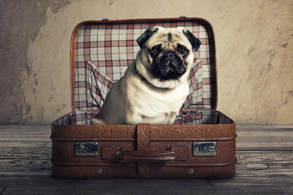 S'expatrier avec son animal  de compagnie :  à quoi faut-il penser ?