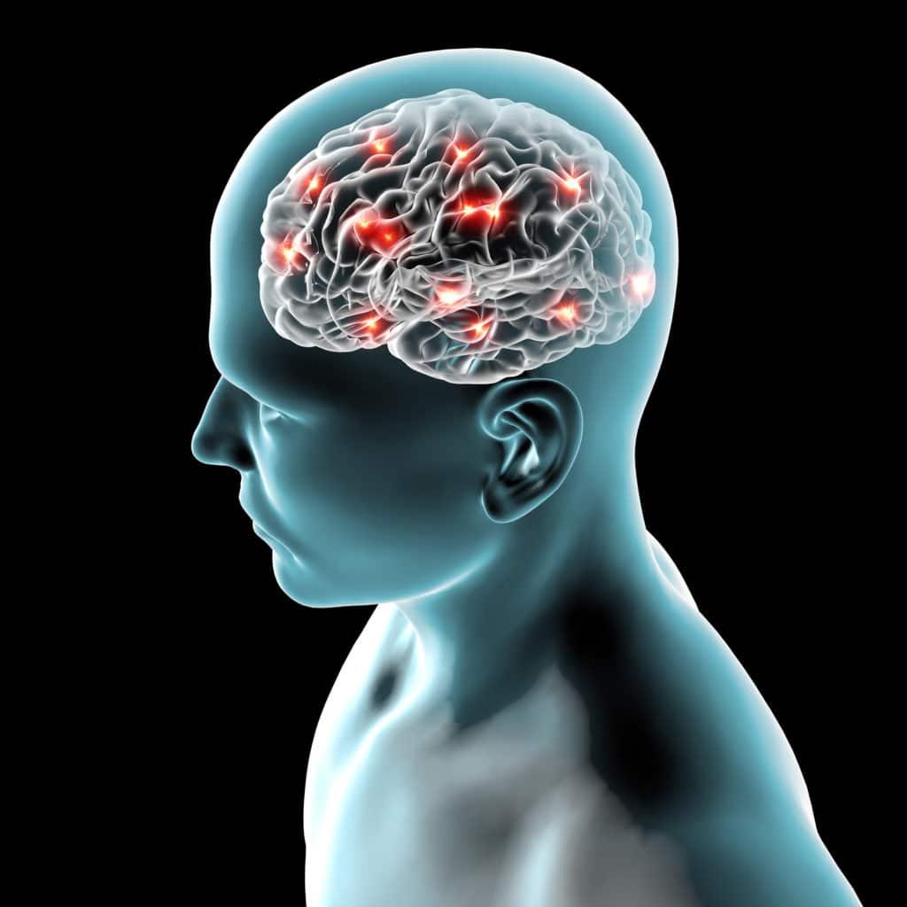 Entraînement cérébral : freiner le déclin cognitif en apprenant une langue